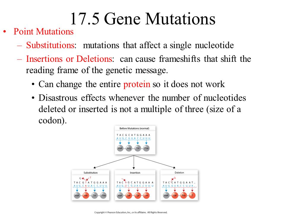 gene mutations causes types and effects To understand what a point mutation is, it must first be explained that dna molecules—and hence the genes found along their length—are composed of building blocks called nucleotide there are two types of point mutations: transition mutations and transversion mutations.