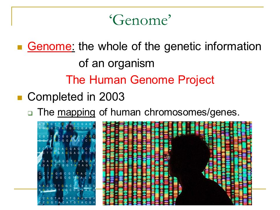 Human Genome: introduction