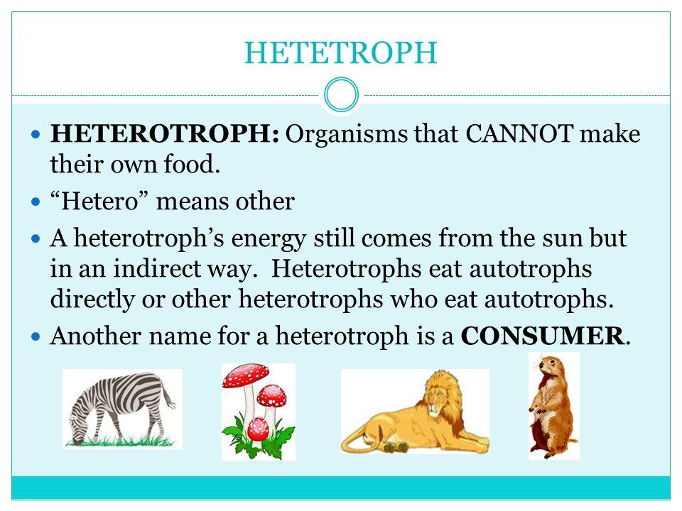 Venn Diagram Of Autotrophs And Heterotrophs Onweoinnovate