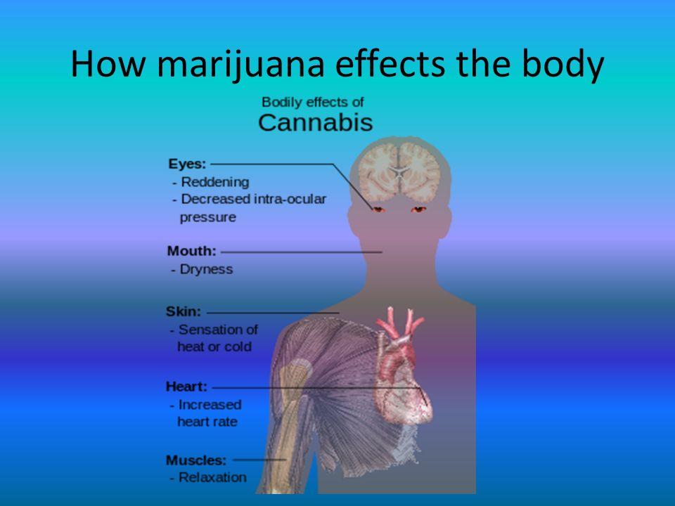 How+marijuana+effects+the+body.jpg