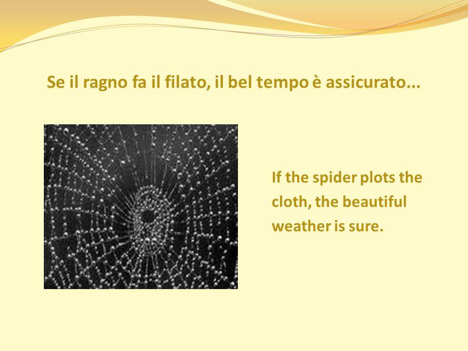 Se il ragno fa il filato, il bel tempo è assicurato...