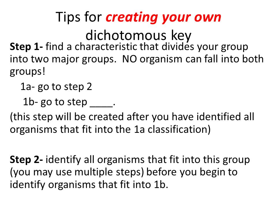 dichotomous key slides