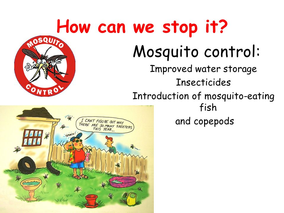 How can we stop it Mosquito control: Improved water storage