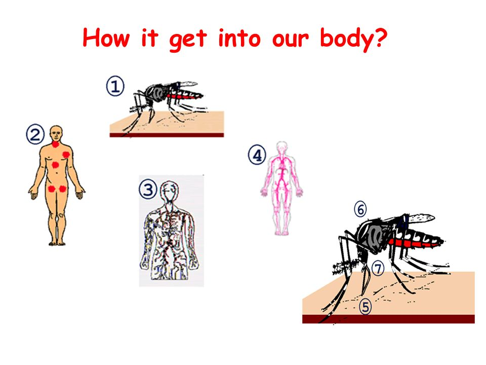 How it get into our body 1.The virus is inoculated into humans with the mosquito saliva.