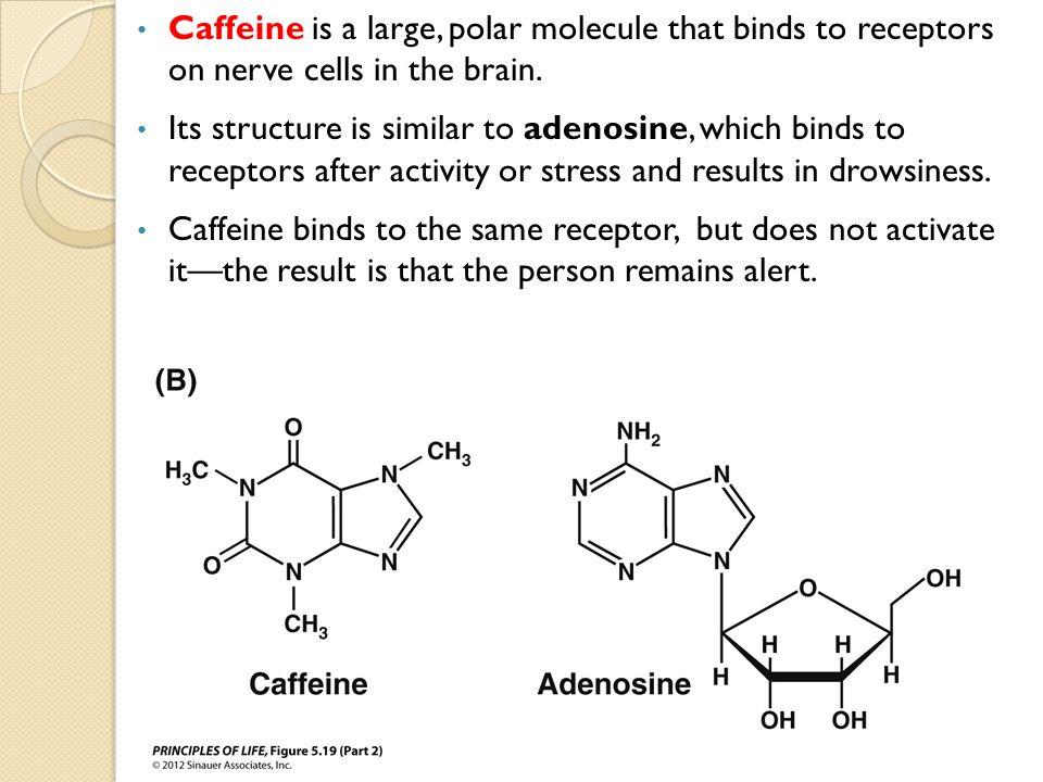 steroid hormones ligands