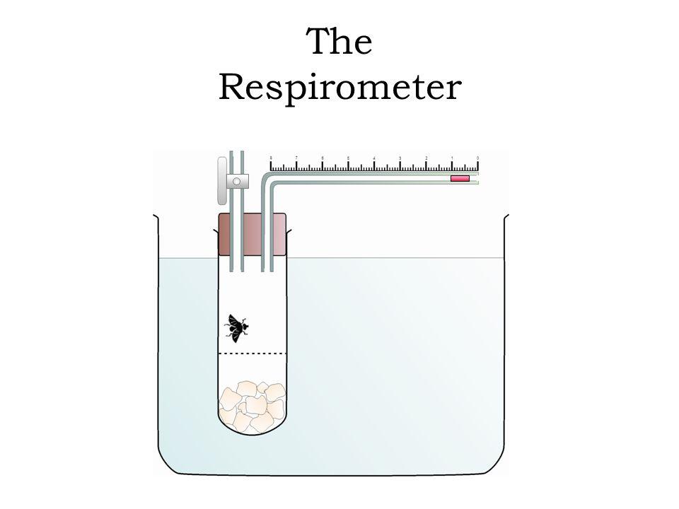 respirometer experiment