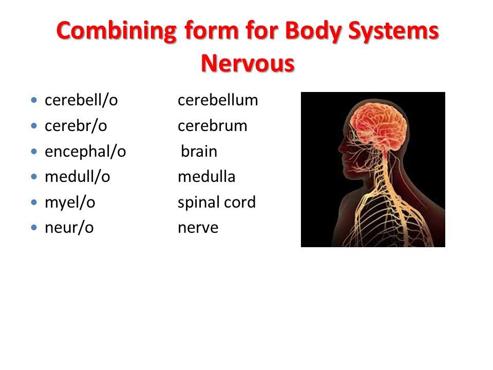 Instructor: Haitham Bader Ninaveha Medical College - ppt download