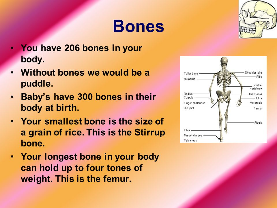 this power point is about the human body. - ppt download, Cephalic Vein