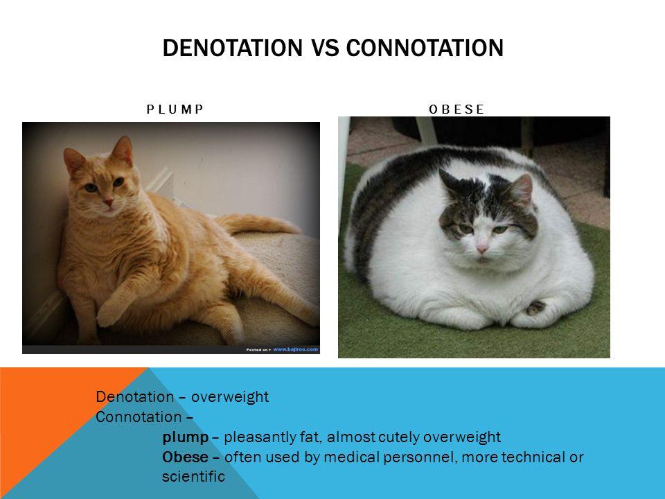 denotation vs connotation essay
