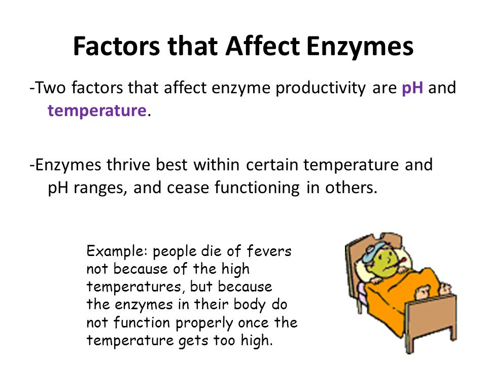 analysis and factors that affect the activity of an enzyme And sensory analysis  and the factors affecting enzyme activity are also although there are many environmental factors that alter enzyme activity.
