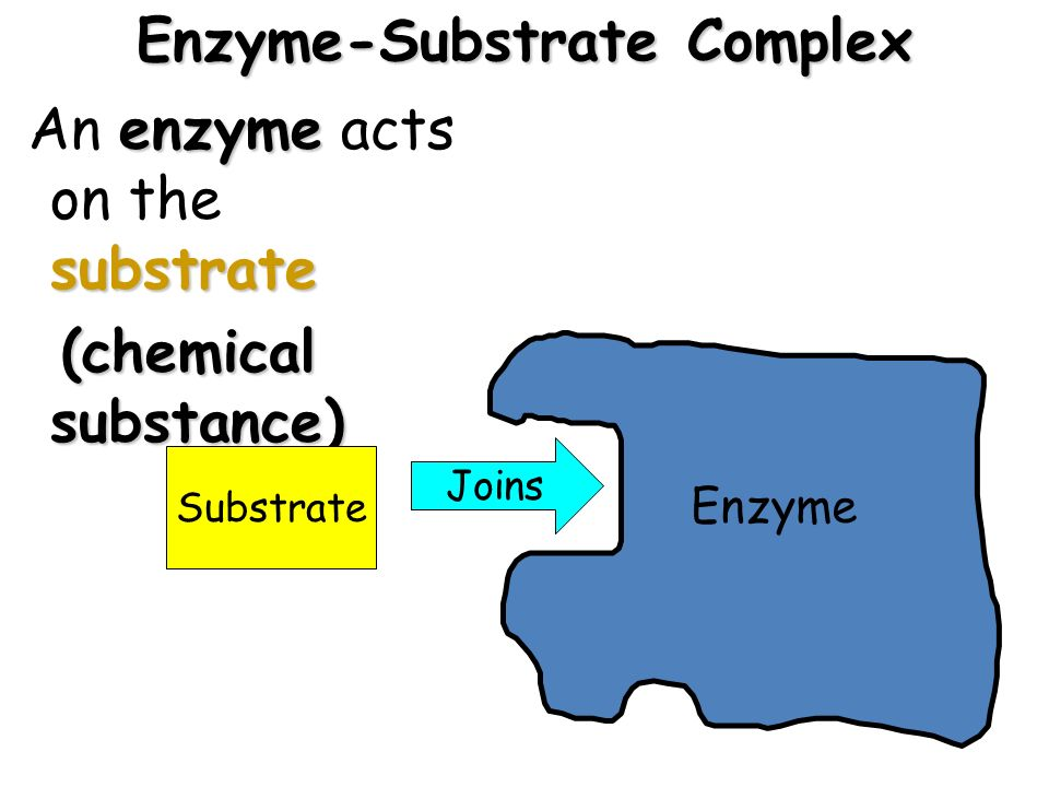enzyme substrate complex Definition of enzyme–substrate complex – our online dictionary has enzyme–substrate complex information from a dictionary of biology dictionary encyclopedia.