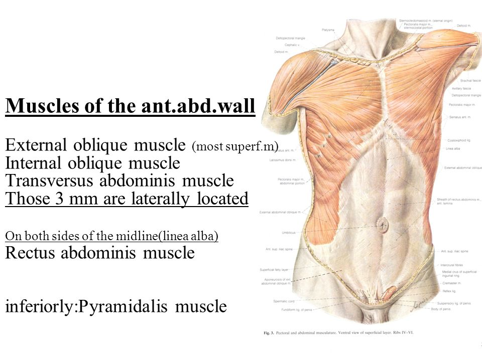 how to build internal oblique muscle