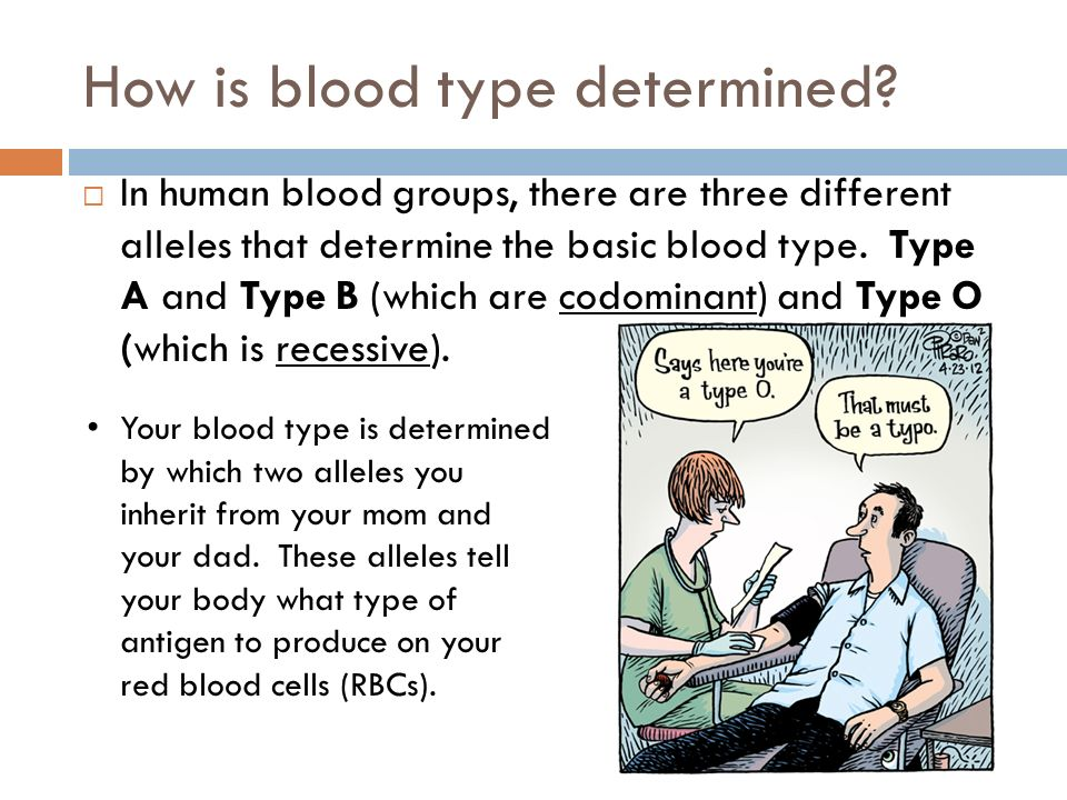 blood types body types and you pdf