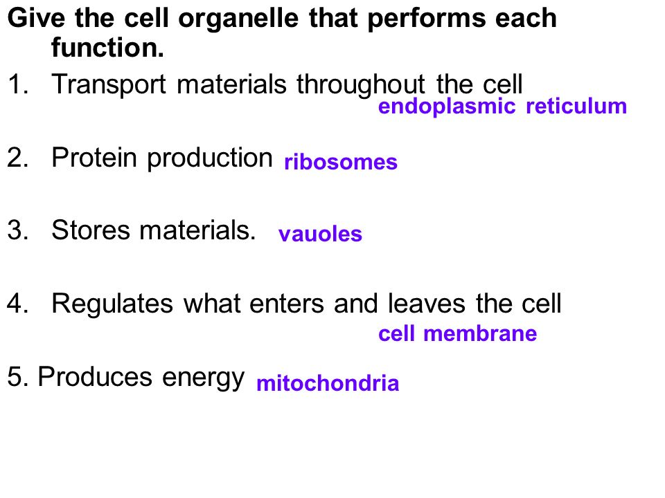 Cell organelle review worksheet answers
