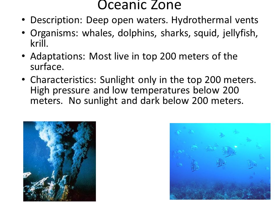 Oceanic Zone Description: Deep open waters. Hydrothermal vents