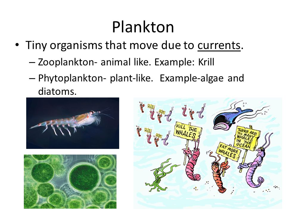 Plankton Tiny organisms that move due to currents.