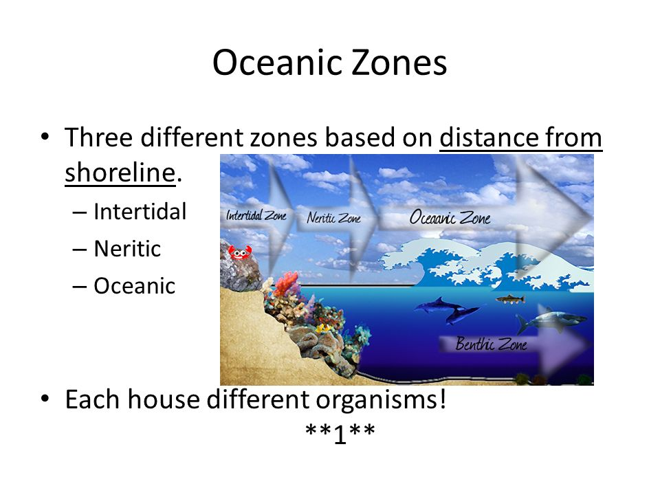 Oceanic Zones Three different zones based on distance from shoreline.
