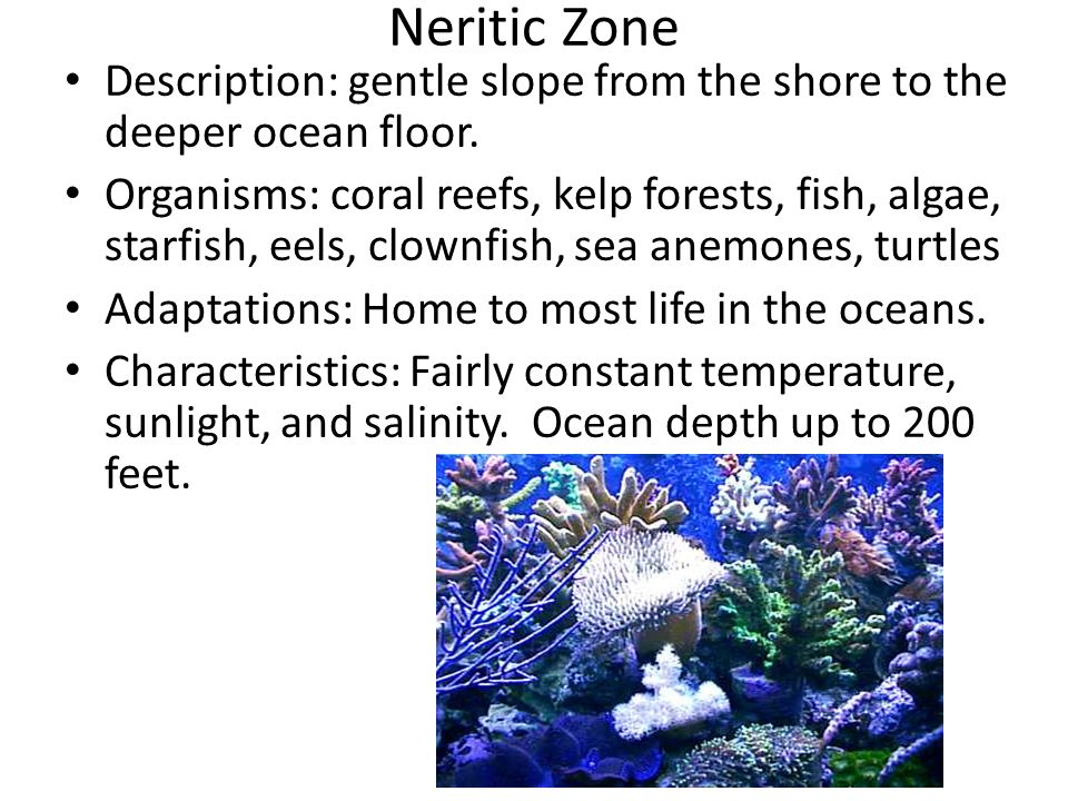 Neritic Zone Description: gentle slope from the shore to the deeper ocean floor.