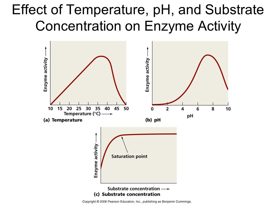 effect of temperature on enzyme activity Factors affecting catalytic activity of enzymes temperature as the temperature rises, reacting molecules have more and more kinetic energy this.