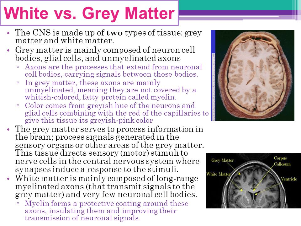 Grey Matter The CNS is made up of two types of tissue: