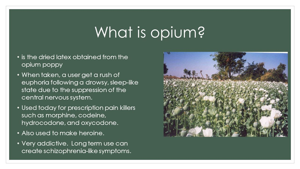 the results of the british opium trade for china The british only acquired it because of the opium wars, and its early economic success was built on the opium trade opium dealing for long enough was the colony's main business it was the.