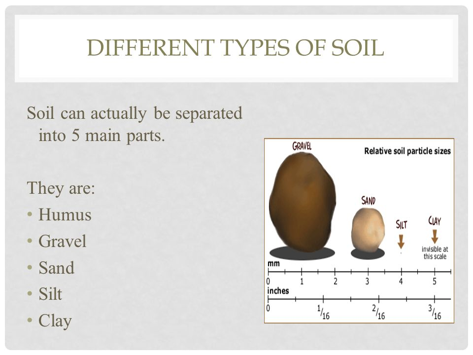 What is the dirt on soil ppt download for Different parts of soil