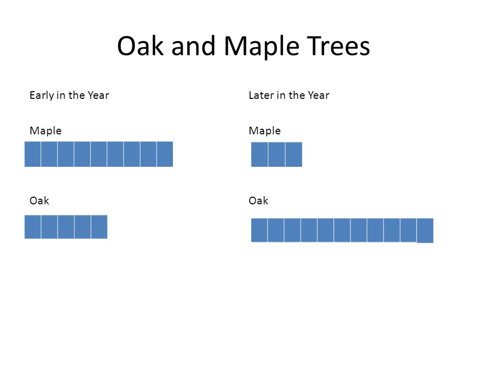 Oak and Maple Trees Early in the Year Later in the Year Maple Maple Oak Oak