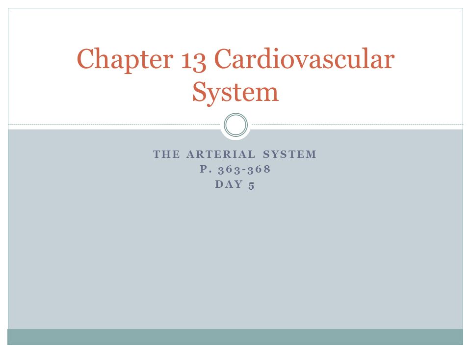 Chapter 13 Cardiovascular System