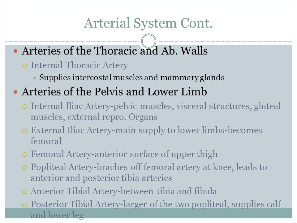 Arterial System Cont. Arteries of the Thoracic and Ab. Walls