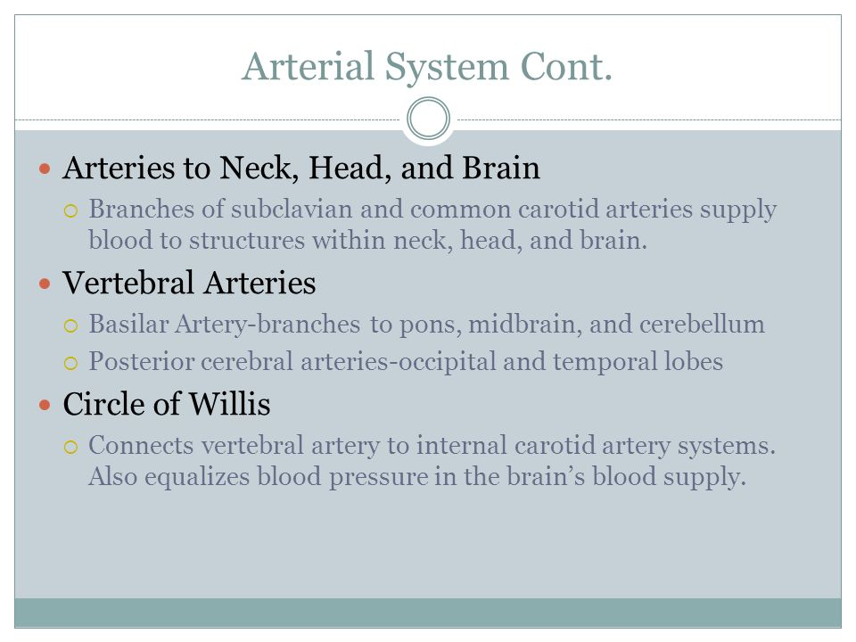 Arterial System Cont. Arteries to Neck, Head, and Brain