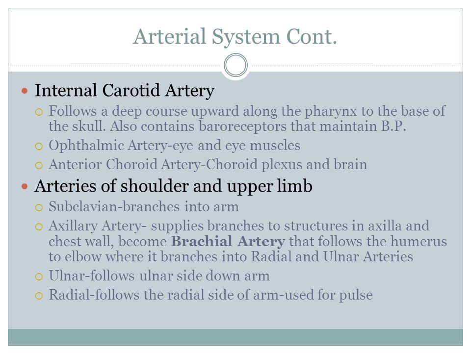 Arterial System Cont. Internal Carotid Artery