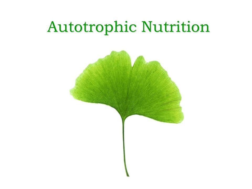 Autotrophic Nutrition Ppt Video Online Download