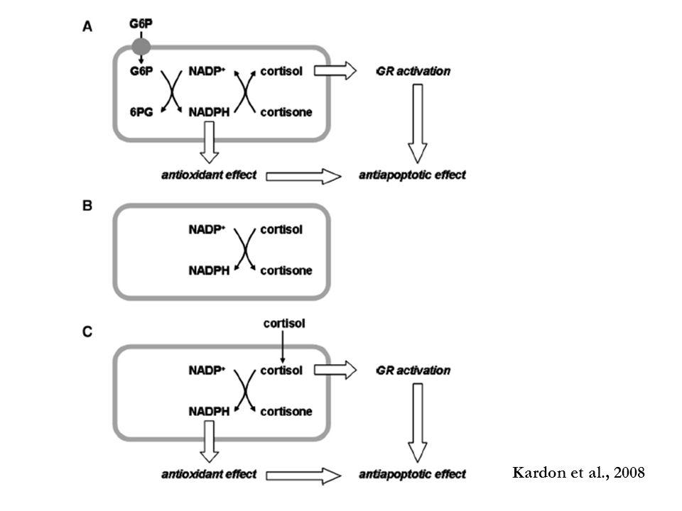Kardon et al., 2008