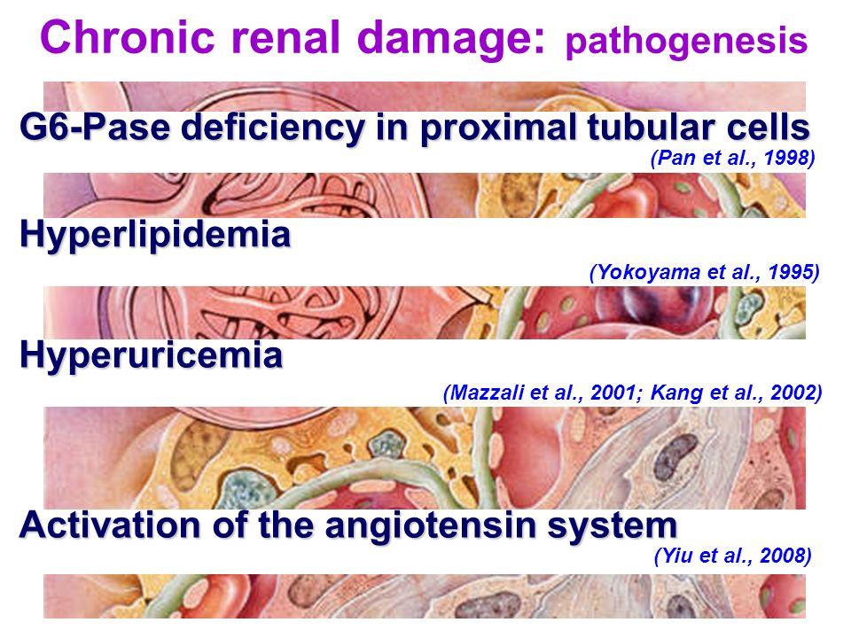 Chronic renal damage: pathogenesis
