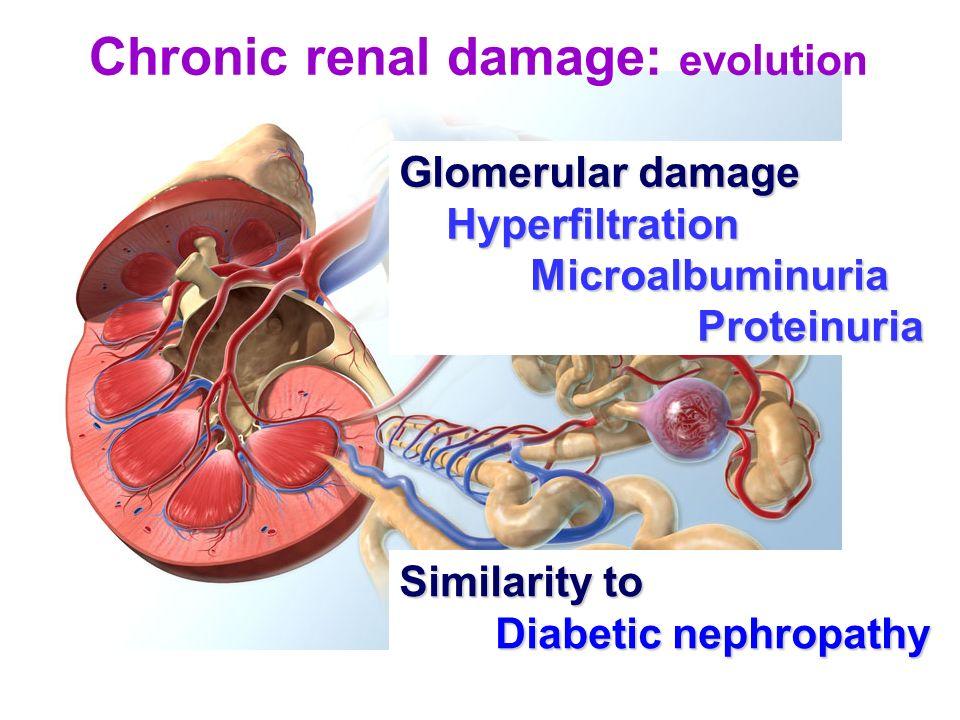 Chronic renal damage: evolution