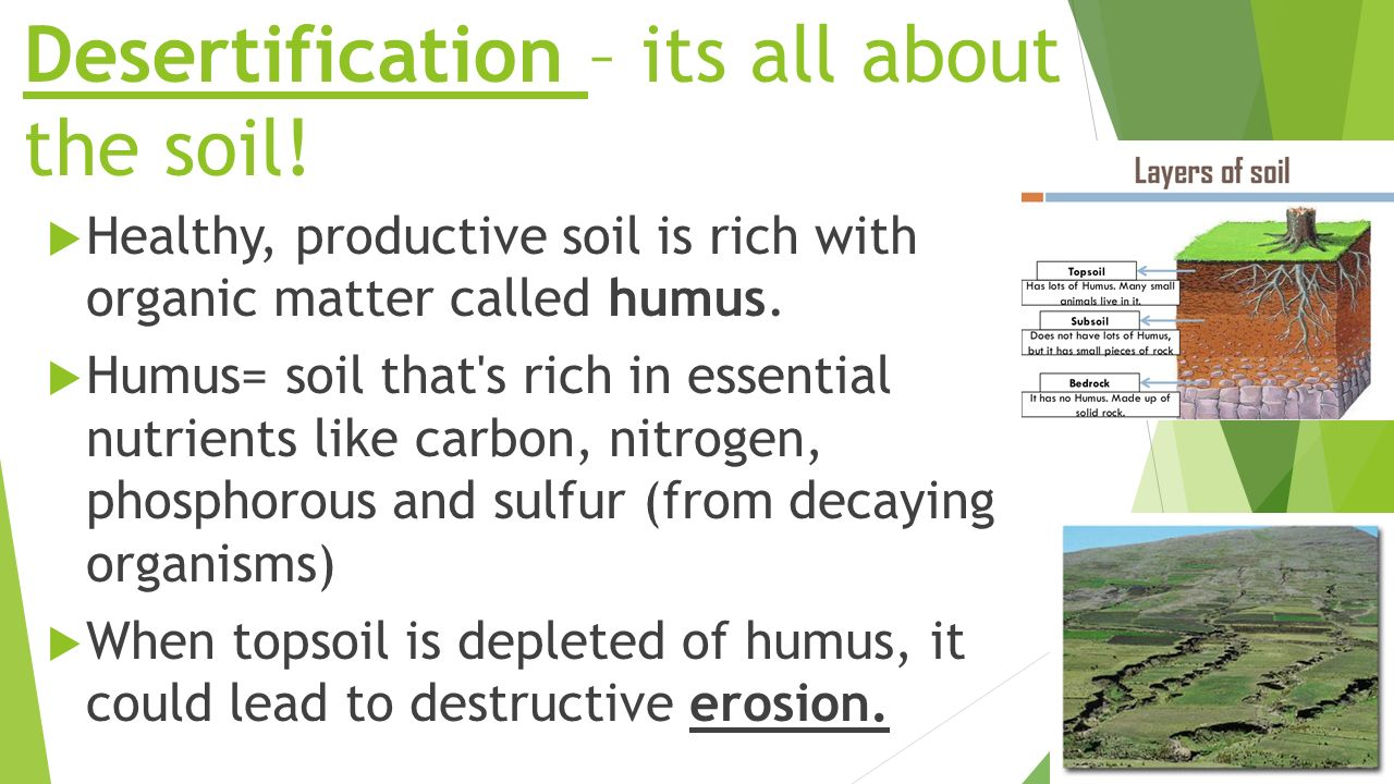 Ecological succession ppt video online download for What is rich soil called