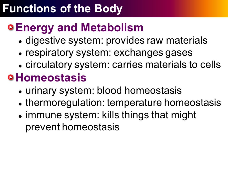 homeostasis metabolism and body A classic example of homeostasis is the regulation of body temperature a mouse  adjusts its production of heat from metabolism to maintain body temperature,.