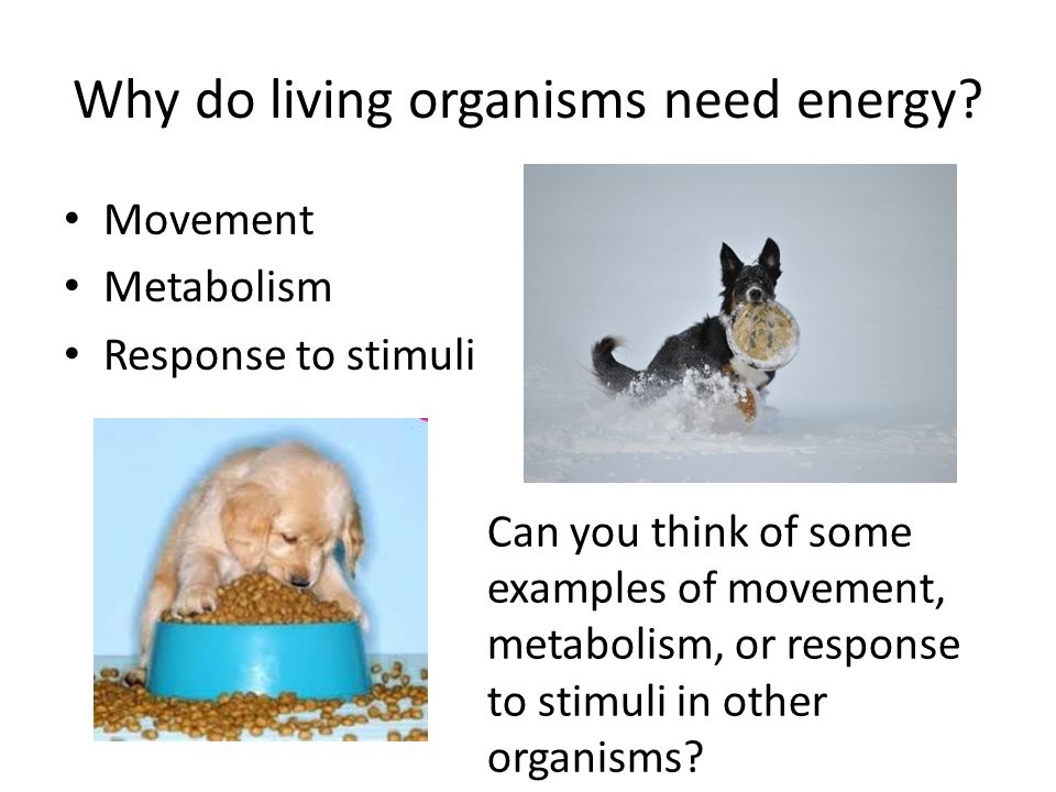 why do living things need energy All living things require a source of energy, nutrients, water, space to grow and reproduce, and a relatively stable environment that allows homeostasis many organisms also require oxygen, but this is not a universal requirement, and oxygen is actually deadly to certain organisms indeed, beyond .