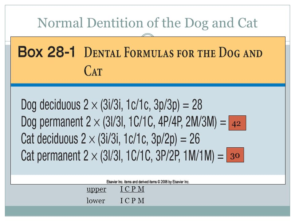 Cat And Dog Chapter