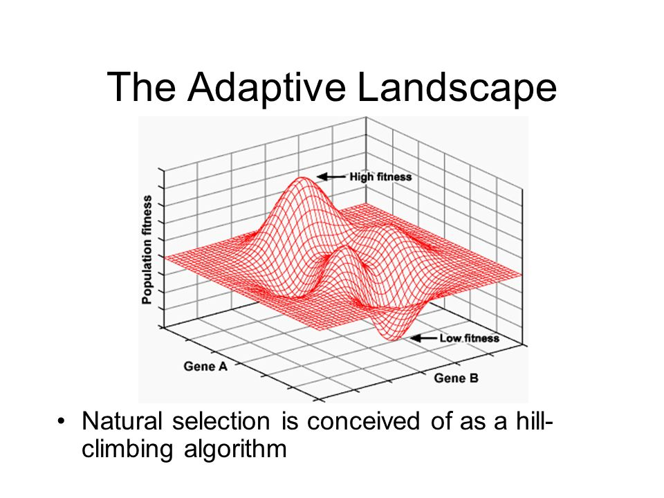 Is Natural Selection Deterministic