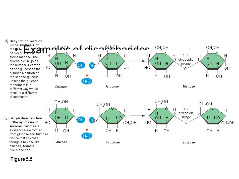 dehydration synthesis reaction In a dehydration synthesis reaction, a water molecule is removed from between the 2 reacting molecules: h- from one and -oh from the other the h- and -oh join together to make water, and the bonds they came from join together - combining the 2 smaller molecules into one larger molecule.