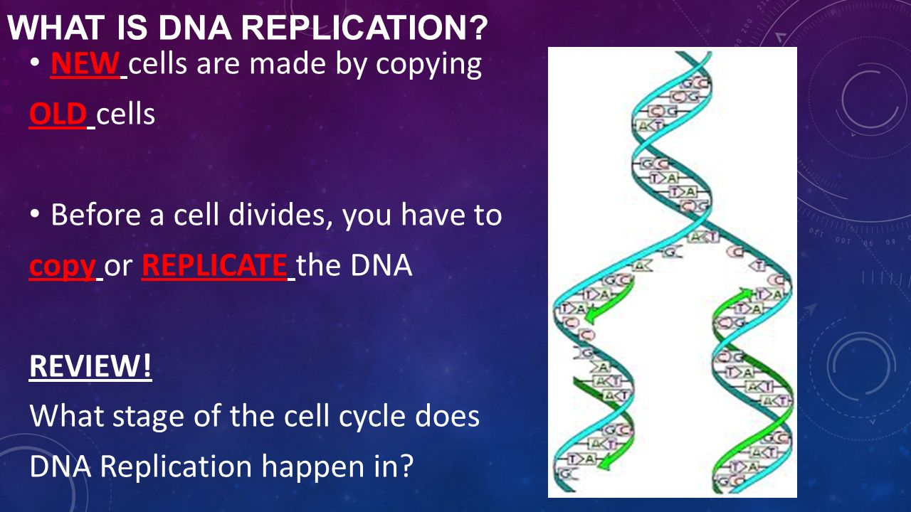 Biology dna unit review worksheet answers