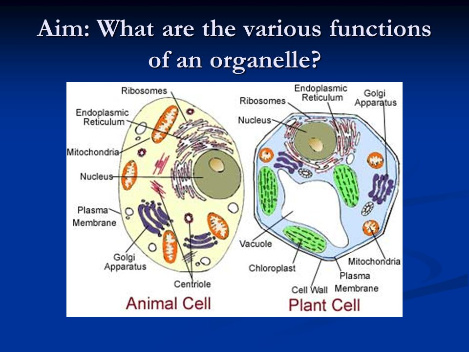 differences between animal and plant cells