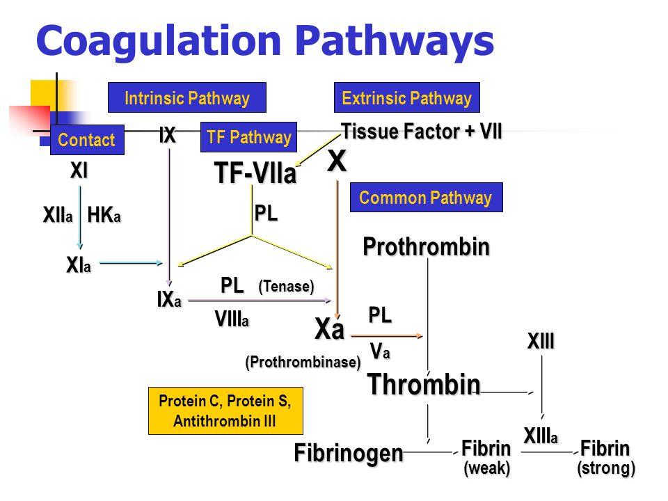 coagulation pathway and physiology Hemostasis » physiology » secondary hemostasis » coagulation cascade: secondary hemostasis the extrinsic pathway and allows coagulation factors.