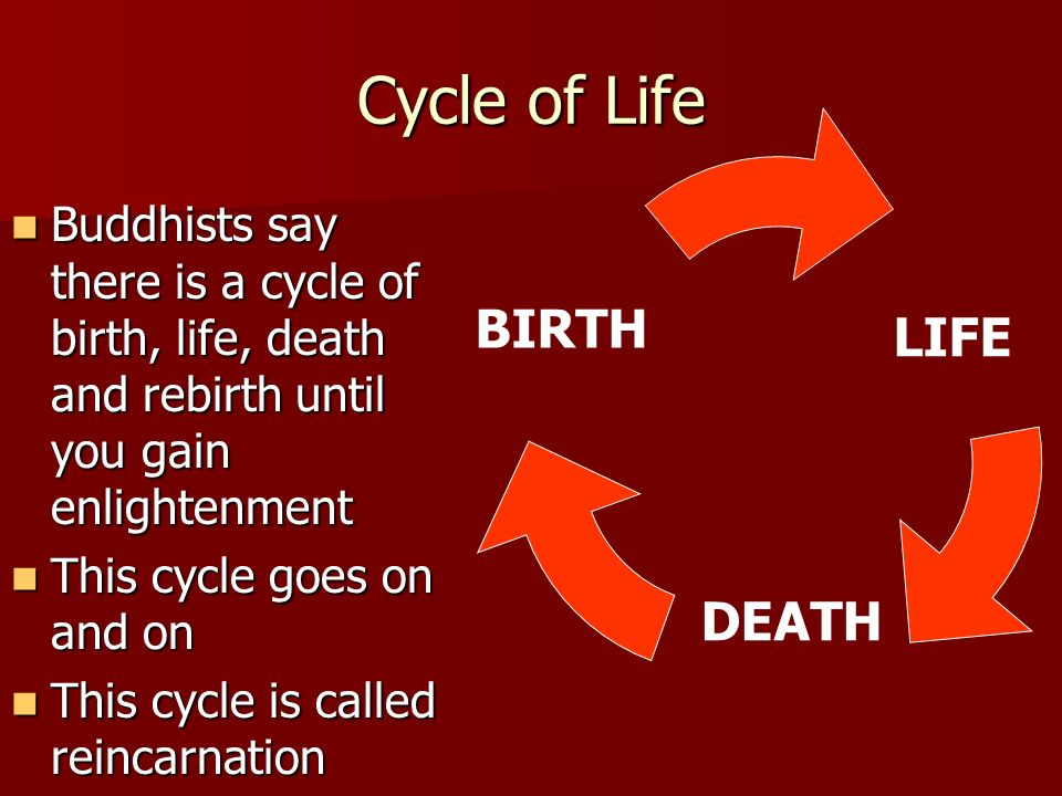 Cycle of Life BIRTH LIFE DEATH