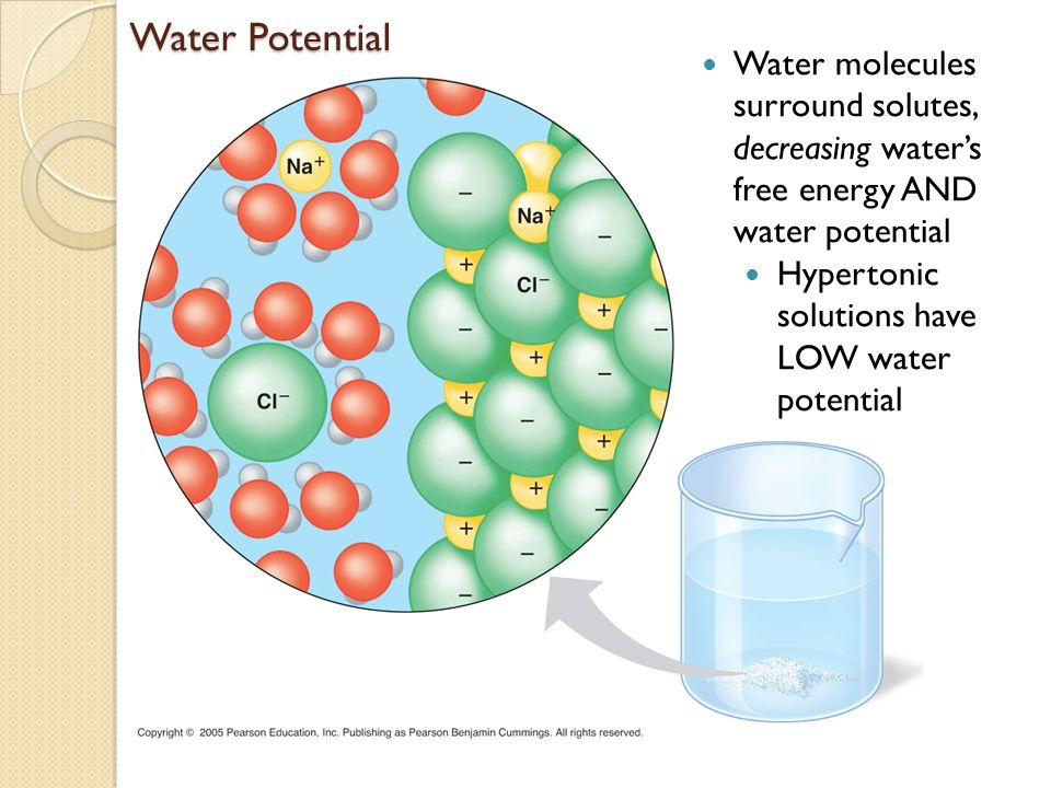 Water Entering A Cell Plant Cells Placed In Hypertonic Solution