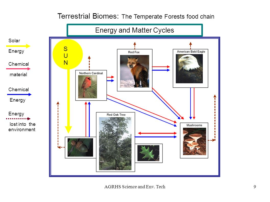 sci 230 temperate forest food web