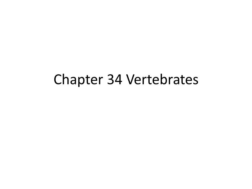 ch 34 vertebrates