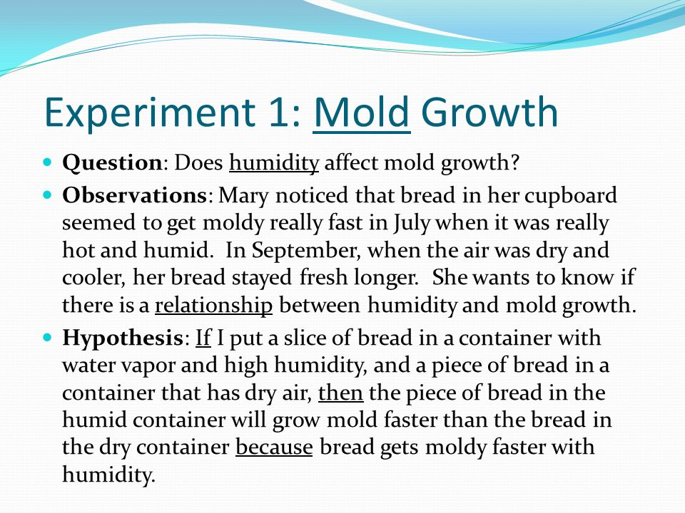 how to make mold grow on bread fast