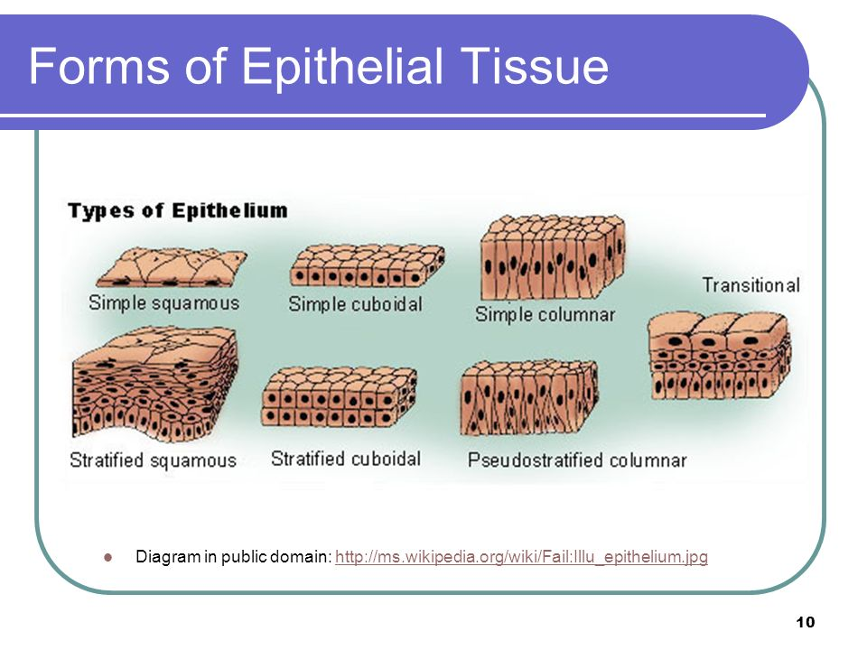 tissues and organs section ppt video online download